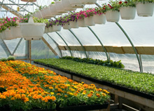 annuals, specialty annuals, perennials Mid Atlantic Plant Company Incorporated - We Are A Horticultural Distributor Representing The Finest Distributors In The United States And Servicing The Wholesale Horticultural Trade.
